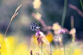 Nature Background Butterfly. Butterfly Insect In Nature. Nature Insect Butterfly On Pink Flower. But poster