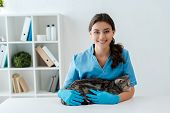 Pretty Veterinarian Smiling At Camera While Holding Tabby Scottish Straight Cat poster