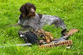 The Hunting Dog Is Next To The Hunting Equipment And Trophies (three Downed Grouse) After The Hunt poster