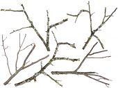 image of lichenes  - Branches and twigs are cut off from an old apple and cherries tree set - JPG