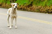 pic of stray dog  - A stray dog standing in the middle of a highway - JPG