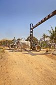 Bullock Cart Congestion Railway Junctions Hinterlands India