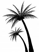 stock photo of palm  - Palm Tree Silhouettes - JPG
