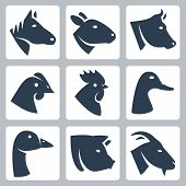 stock photo of rooster  - Vector domesticated animals icons set - JPG