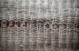 picture of uncolored  - Detailed background texture of uncolored wooden board with nice pattern - JPG