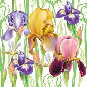 foto of purple iris  - Seamless pattern with Iris flowers - JPG
