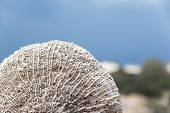 foto of oman  - Images of of a sponge on Oman beach - JPG