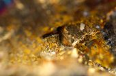 pic of bronze silver gold platinum  - Abstract background from a Crystal mineral - JPG