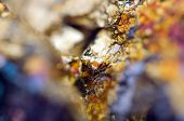 picture of bronze silver gold platinum  - Abstract background from a Crystal mineral - JPG