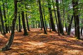 ������, ������: A Walk In The Woods