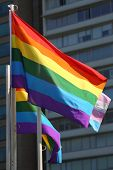 pic of gay pride  - A gay pride flag waving in the wind on a sunny day - JPG
