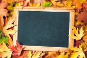 image of foliage  - Chalkboard and autumn maple leaves on background - JPG