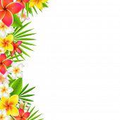 pic of hawaiian flower  - Flowers Border - JPG