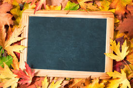 stock photo of chalkboard  - Chalkboard and autumn maple leaves on background - JPG