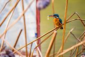 foto of marshes  - A bird sitting among of yellow reed marshes with little fish in month in a park of China - JPG