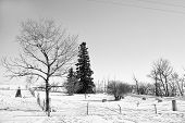 stock photo of graveyard  - Small rural graveyard in winter in black and white - JPG