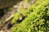 picture of bavaria  - Closeup green moss on mountain Breitenstein in the Alps in Bavaria Germany - JPG