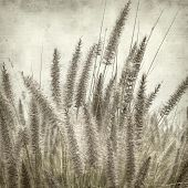 stock photo of tail  - textured old paper background with cat tail grass - JPG