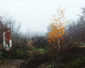 foto of loneliness  - Young birch grows among ruins of old house in heavy fog - JPG