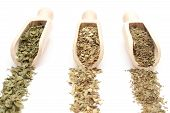 picture of oregano  - Green basil oregano and dried parsley on wooden spoons - JPG