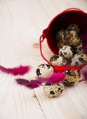 picture of quail  - Quail eggs in a bucket with feathers on a wooden background - JPG