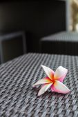 stock photo of plumeria flower  - Beautiful plumeria flower on woven rattan at spa place - JPG