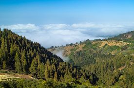 foto of burro  - Inland Gran Canaria view over the tree tops towards clud cover on the north of the isalnd - JPG