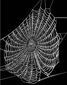 stock photo of spider web  - illustration with spider web isolated on black background - JPG