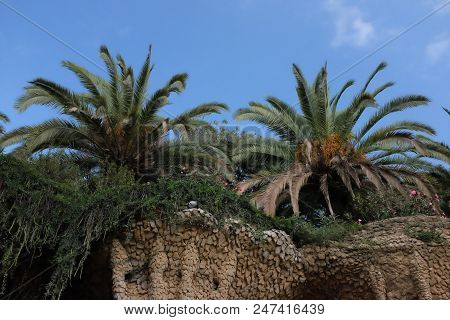 Palm Trees At Park Guell