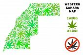 Royalty Free Cannabis Western Sahara Map Composition Of Weed Leaves. Concept For Narcotic Addiction  poster
