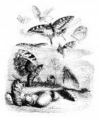 Resurrection, vintage engraved illustration. Magasin Pittoresque 1841. poster
