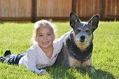 stock photo of blue heeler  - a little girl with her pet dog - JPG