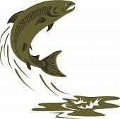 image of brook trout  - Vector art of a salmon on white background - JPG