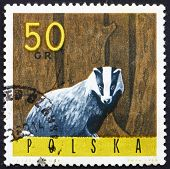 Postage stamp Poland 1965 European Badger