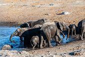 A Herd Of African Elephants -loxodonta Africana- Bathing In A Waterhole In Etosha National Park, Nam poster