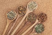 stock photo of meadowsweet  - Herb selection for alternative health remedies in olive wood spoons over cork background - JPG