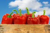 fresh red bell peppers (capsicum) in a wooden crate against a blue sky with clouds