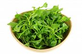A Bowl of Fresh Watercress (Nasturtium officinale), isolated on white background