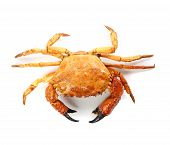 picture of cooked blue crab  - seafood red crab isolated on a white background - JPG