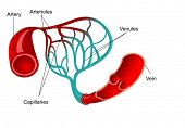 picture of capillary  - Capillary with words of parts - JPG