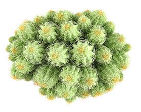 image of peyote  - Plant bush - JPG