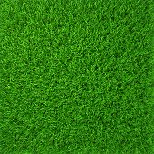 stock photo of growth  - green grass - JPG