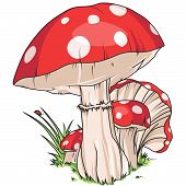 image of shroom  - A red mushroom with white circle dots - JPG