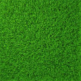 foto of grass  - green grass - JPG