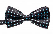 foto of bow tie hair  - Elegant black bow tie in blue polka dots on an isolated white background - JPG