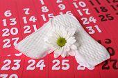 image of menses  - Sanitary pads and white flower on red calendar background - JPG