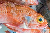 stock photo of red snapper  - Red porgy fish for sale at a market in Portugal - JPG