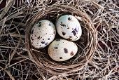 stock photo of quail egg  - quail eggs on the wooden table - JPG