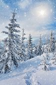 stock photo of snow forest  - Path in the spruce forest in winter in the mountains - JPG