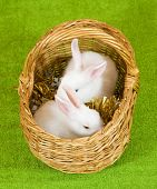 image of tawdry  - Two white rabbits in basket against trumpery on green - JPG